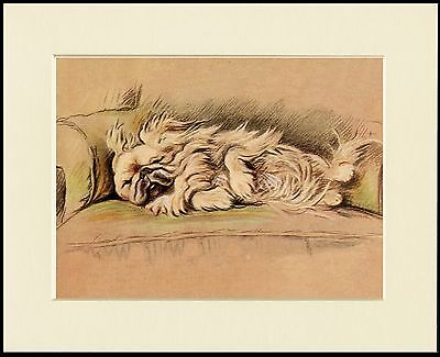 PEKINGESE SLEEPING DOG LOVELY PRINT MOUNTED READY TO FRAME