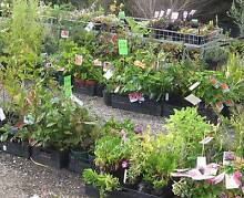 NATIVE AND PERENNIAL PLANTS next sale 6th and 7th May 10.00am Barossa Area Preview