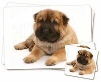 Orso Rivestito Shar-pei Cucciolo Di Cane Singolo 2x Tovagliette+2x -  - ebay.it