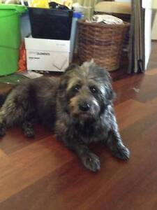 Experienced dog minder Caboolture Caboolture Area Preview