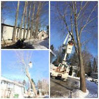 Safe and Affordable Tree Removal