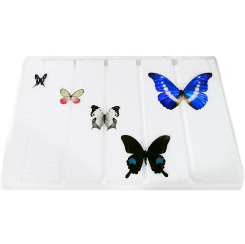 STYROFOAM BUTTERFLY SPREADING BOARD