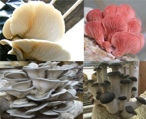 Buy 1 Get 1 Free!!  Mushroom Liquid Cultures 10mL  Multiple Strains