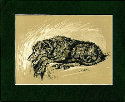 Lucy Dawson ~ Deerhound ~ (Mac) Colour Print Genuine Vintage 1937