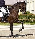 Artemis Park Riding School Meredith Golden Plains Preview