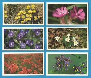 Players-Grandee-cigar-cigarette-cards-BRITAINS-WILD-FLOWERS-1986-VG-Full-Set
