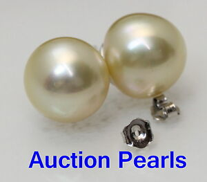 11 -12 MM Genuine Australian Champagne South Sea Pearl Stud Earrings 18kt Gold