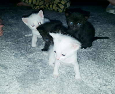 Kittens need a good home