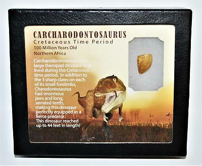"""Used, CARCHARODONTOSAURUS Dinosaur Tooth .671"""" Fossil African T-Rex LDB #14104 15o for sale  Salem"""