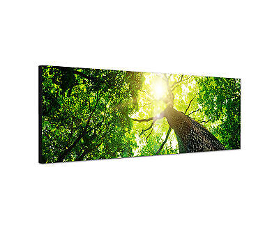 Panoramabild - 150x50cm grüne Natur Kunstdruck auf Leinwand modern