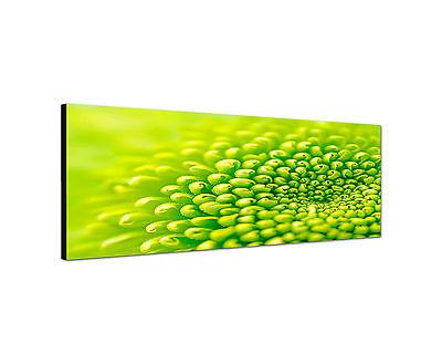 Panoramabild -150x50cm grüne Blume Keilrahmenbild Leinwand modern Kunstdruck