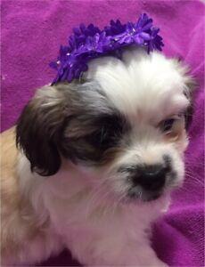 Adopt Dogs & Puppies Locally in Saskatchewan | Pets | Kijiji Classifieds