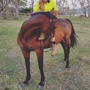 WANT TO RENT ROOM WITH ACREAGE FOR HORSE Ipswich Ipswich City Preview
