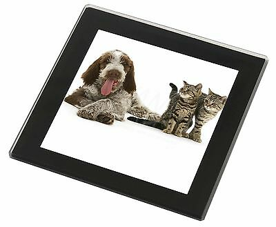 Italian Spinone Dog and Kittens Black Rim Glass Coaster Animal Breed G, AD-SP1GC