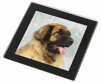Blonde Leonberger Dog Black Rim Glass Coaster Animal Breed Gift, AD-LE1GC