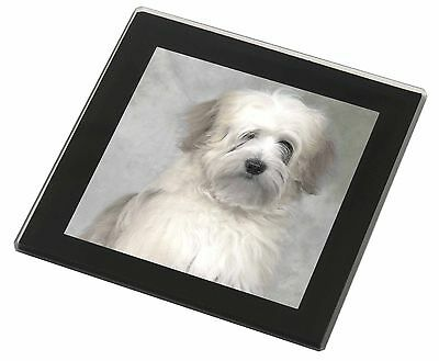 White Tibetan Terrier Dog Black Rim Glass Coaster Animal Breed Gift, AD-TT1GC
