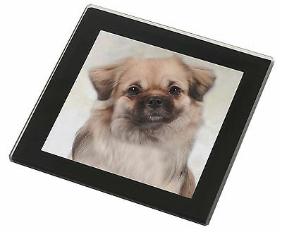 Tibetan Spaniel Dog Black Rim Glass Coaster Animal Breed Gift, AD-TS1GC