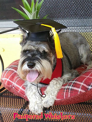 "Dog Graduation cap/hat for dogs with 12-15"" collar(your choice of tassel color)"
