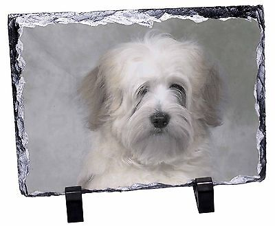 White Tibetan Terrier Dog Photo Slate Christmas Gift Ornament, AD-TT1SL