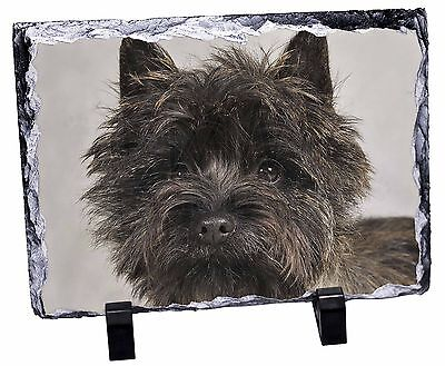 Brindle Cairn Terrier Dog Photo Slate Christmas Gift Ornament, AT-CT2SL
