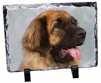 Blonde Leonberger Dog Photo Slate Christmas Gift Ornament, AD-LE1SL