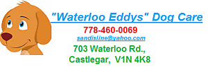 WATERLOO EDDYS Doggie Day Care