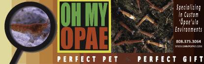 ECOshrimp Shop - Ecosystem Pet
