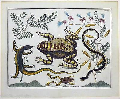 A. Seba 1734-65 Kröte-Waran-Frosch-Schlange-Echse Sehr großer Kupferstich