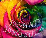 Jocund Jonquils