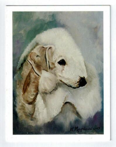 New Bedlington Terrier Pair Notecard Set - 12 Note Cards By Ruth Maystead BED-4