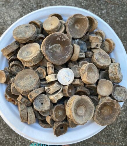 1/2 LB Fossilized Shark Vertebrae Lot - SHARK VERTS