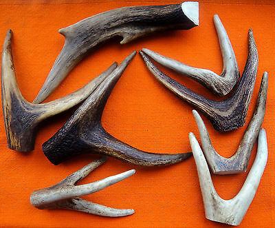 Mixed Lot Of Deer Antler Cuts For Sauna Chest Door Handle Custom Make DIY #2662 (Sauna Diy)
