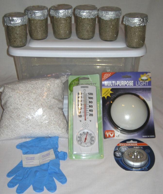 Simple Mushroom Growing Kit - 6 Jars  Grow Mushrooms Fast!