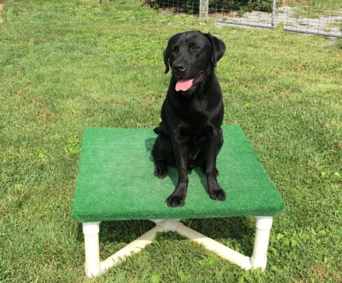 Dog Agility Pause Table - Any 5 heights