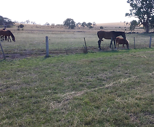 Horse agistment opportunity Wollert Whittlesea Area Preview