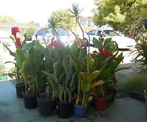 Plants for Sale South Bunbury Bunbury Area Preview