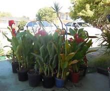 Plants for Sale South Bunbury Bunbury Area Preview
