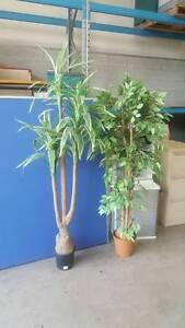 ARTIFICIAL PLANTS - office nature fake replica decor garden Murarrie Brisbane South East Preview