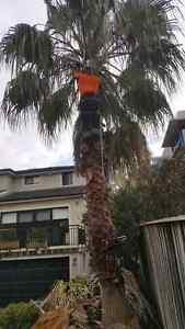 JACOB'S TREE LOPPING & STUMP GRINDING North Sydney North Sydney Area Preview