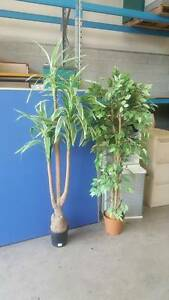 OFFICE POT PLANTS fake replica decor garden work desk chair work Murarrie Brisbane South East Preview