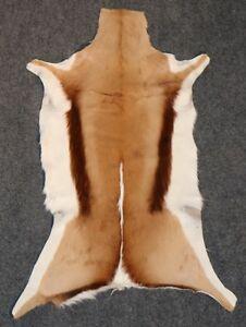 African Genuine Springbok Skin / Hide  Grade A Quality Free Shipping