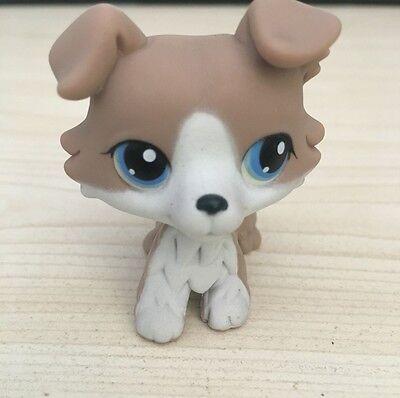 Littlest Pet Shop Lps  67 Grey Collie Blue Eyes Dog   Chien Colley