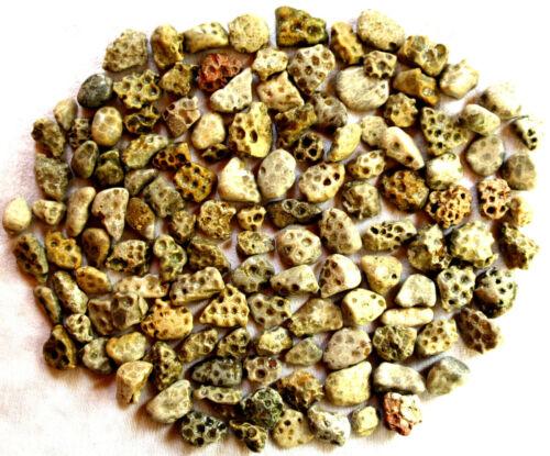 130 Unpolished Michigan Petoskey Stone - Hexagonaria - Coral Fossil - 2.5+ lbs