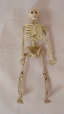 Halloween - Skeleton  #401 - 1/12 scale dollhouse miniature