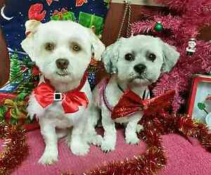 Affordable  Dog Grooming ipswich Ipswich Ipswich City Preview