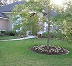 Yard Cleanup & Maintenance - Affordable, Quality Work!