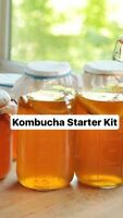 Scoby & Starter Tea so you can make your own kombucha at home!