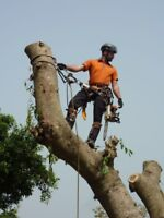Tree removal services, low impact logging