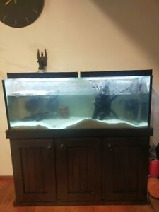 4ft fish tank with stand and turtle