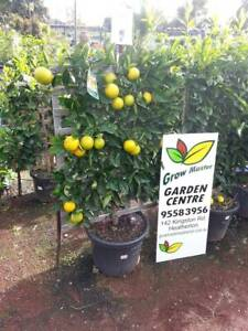 Gorgeous espalier plants. Many different varieties. Start at $189 Heatherton Kingston Area Preview